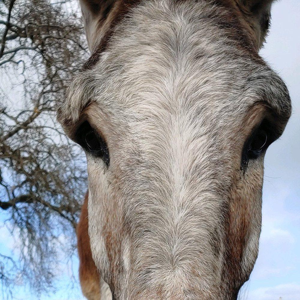 Walker the Donkey