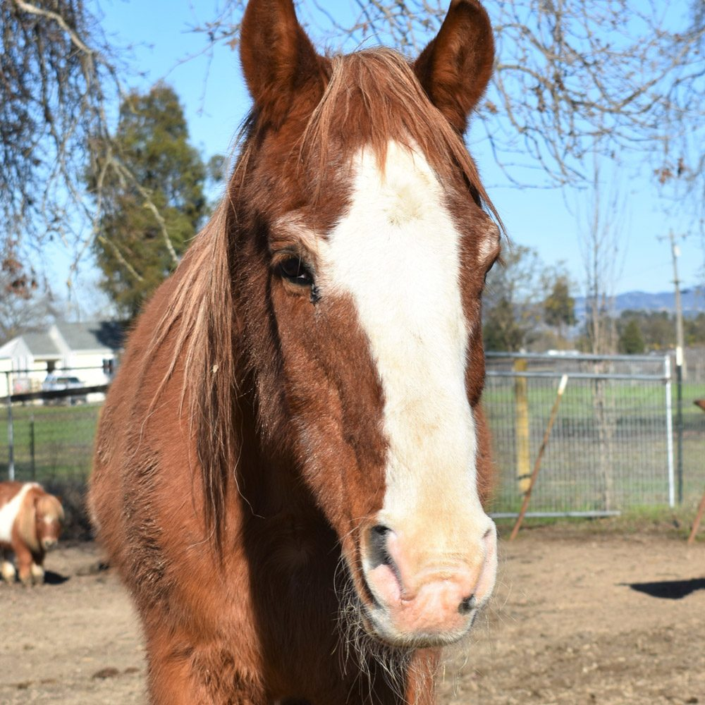 Buddy the Horse
